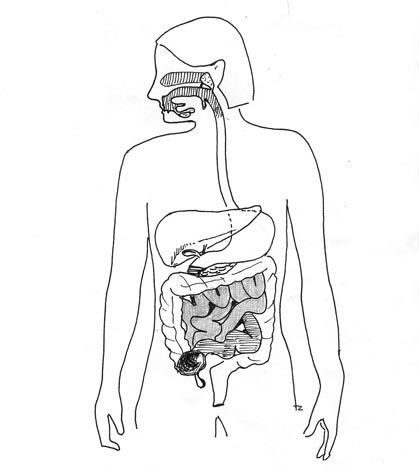 October07healtheditionAUSTRALIA on the digestive system books