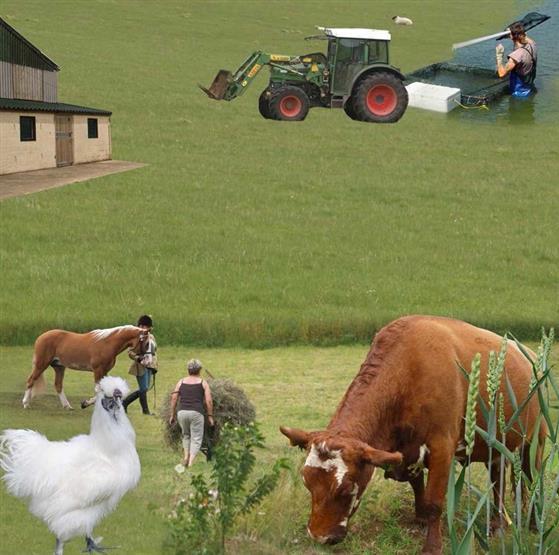 farm livestock management