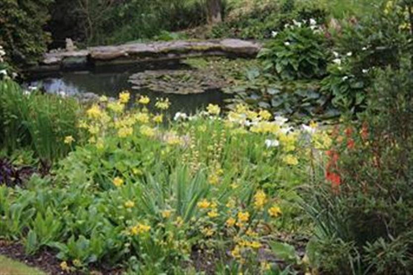 Plants for wet places what to plant in wet ground for Landscape design courses adelaide