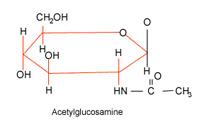 acetylglucosamine.
