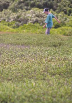 Child playing in a lavender field