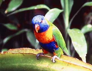ornithology_Bird7 Online Tutor Application Form on classroom setup examples, hiring domain model diagram,