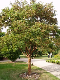 How To Choose A Tree Tree Selection And Establishment