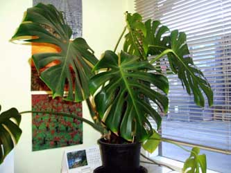 indoor plants, interior plantscaping, greenhouse, tropical