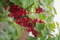 Organic plants course.